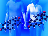 Molecular Models of the Hormones Testosterone (Left) and Estrogen (Right)