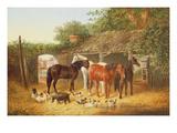 Farmyard Companions