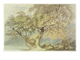 A Great Tree  C1796 (W/C over Graphite on Paper)