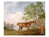 Pumpkin with a Stable-Lad  1774 (Oil on Panel)