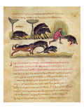 Treatise on the Boar: Life  Mating  Hunting  Illustration from the 'Cynegetica' by Oppian