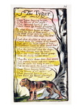 The Tyger'  Plate 36 (Bentley 42) from 'Songs of Innocence and of Experience' (Bentley Copy L)