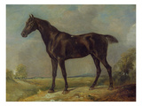 Golding Constable's Black Riding-Horse  C1805-10 (Oil on Panel)