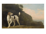 A Foxhound  C1760 (Oil on Paper Laid on Board)