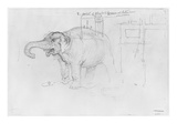Album of the Siege of Paris  Elephant (Pen and Brown Ink Wash and Pencil on Paper)