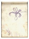 Iris (Purple Pencil on Paper)