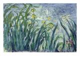 Yellow and Purple Irises  1924-25
