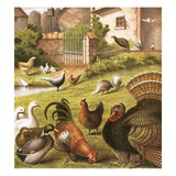 Poultry at a Farm