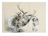 Stags' Heads and Dog  1857 (Pencil on Paper)