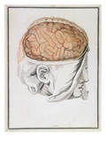 The Brain  from 'Traite D'Anatomie De Cerveau' by Felix Vicq D'Azyr (1748-94) 1786
