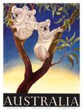 Australia Koala c.1956 Reproduction d'art par Eileen Mayo