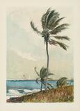 Palmier, Nassau Reproduction pour collectionneurs par Winslow Homer