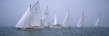 Yachts Racing in the Ocean  Annual Museum of Yachting Classic Yacht Regatta  Newport  Newport Co