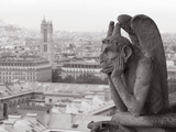 Gargoyle Statue at a Cathedral  Notre Dame  Paris  Ile-De-France  France