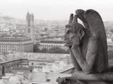 Gargoyle Statue at a Cathedral  Notre Dame  Paris  Ile-De-France  France