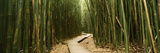 Bamboo Forest  Oheo Gulch  Seven Sacred Pools  Hana  Maui  Hawaii  USA