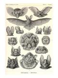 Chauves-souris Reproduction d'art par Ernst Haeckel