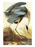 Grand héron bleu Reproduction d'art par John James Audubon