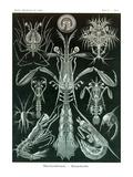 Thoracostraca  Crustaceans