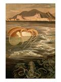 Nautiles Reproduction d'art par F.W. Kuhnert