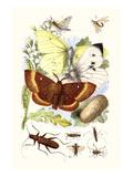 May-Fly  Brimstone Butterfly  Musk Beetle  Nut Weevil