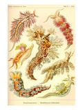 Nudibranch Gastropod Mollusks Reproduction d'art par Ernst Haeckel