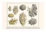 Cnidarians  Ocular Corals  Sea Coral  Star Coral  Staghorn Coral  Needle Coral