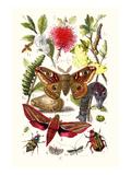 Emperor Moth  Elephant Hawk Moth  Tortoise Beetle
