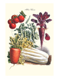 Vegetables; Carrot  Beet  Tomato  and Celery