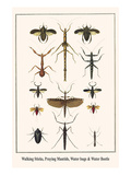 Walking Sticks  Praying Mantids  Water Bugs and Water Beetle