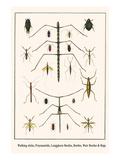 Walking Sticks  Praymantids  Longghorn Beetles  Beetles  Watr Beetles and Bugs