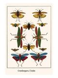 Grasshooppers  Cicadas