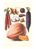 Vegetables; Carrot  Potato  Onion  and Pumpkin