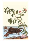 Shoreline Purslane with a Common Surinam Toad