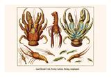 Land Hermit Crab, Norway Lobster, Shrimp, Amphopods Reproduction d'art par Albertus Seba