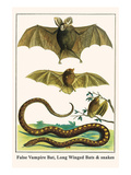 False Vampire Bat  Long Winged Bats and Snakes