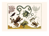 Frogs  Lizards  Snakes  Birds and Plants