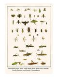Ichneumon Wasps  Flies  Potter Wasp  Bees  Wood Wasp  Stonefly  Mayfly  Beetles  Jewel Beetle  etc