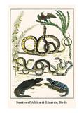 Snakes of Africa and Lizards, Birds Reproduction d'art par Albertus Seba