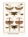 Walking Sticks  Katydid  Dragonflies