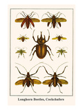 Longhorn Beetles  Cockchafers