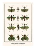 Praying Mantis  Grasshoppers
