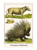 Porcupine and Babirussa