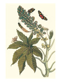Castor Oil Tree with a Moth