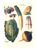 Vegetables; White Asparagus  Spago  Peppers  Cabbage  Turnip