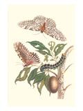 Limbo Tree with Owlet Moth