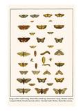 Large Yellow Underwing  Butterflies  Buff Tip  Ichneumon Wasp  Mottles Umber  Leopard Moth  etc