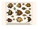 Lined Surgeon Fish  Whitecheek Surgeonfish  Brown Surgeonfish  Convict Surgeonfish  etc