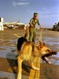 Vietnam War USAF Guard Dog