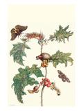 Moths and a Potato Plant